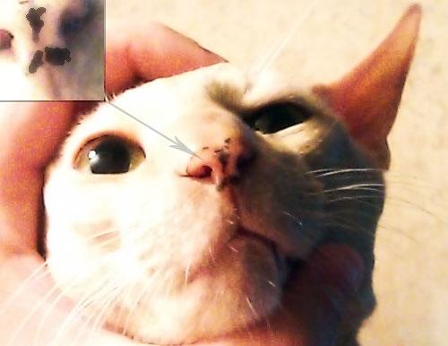 Кот апокалипсиса - забавная родинка
