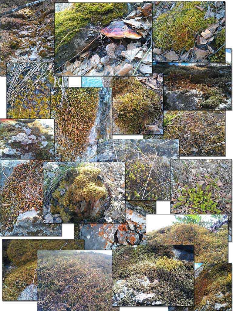 (06.05.2013 doroga) Мох - Много мха и разных растений