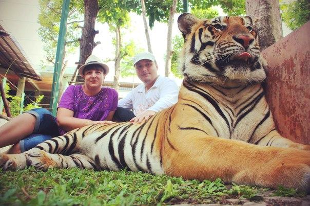 (20.04.2014 zveri, me) Тигр - Из Тайланда