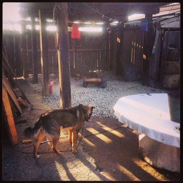 (23.06.2014 instagram, blogger, zveri) Собака щебенку одобряка - И на это ушел весь день