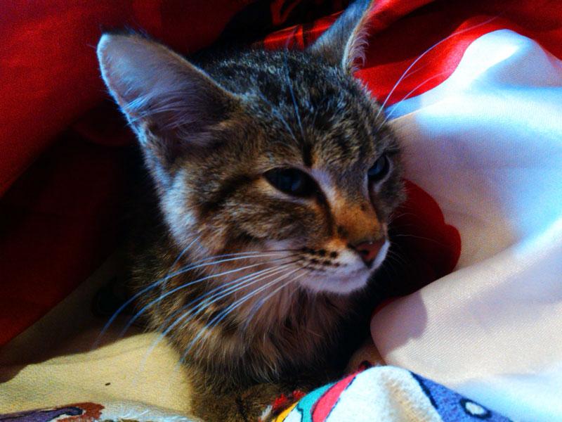 (25.08.2014 instagram, blogger, zveri) Кошка. Новая, приблудная - Еще тощая, но уже живая