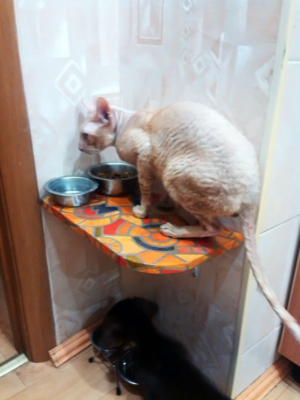 (18.11.2015 zveri) Полочка для кормления - Как кормить собаку и кошек одновременно