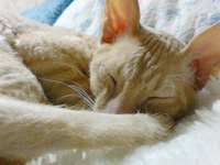 (21.11.2007 zveri) Спит котик