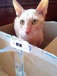 (19.03.2012 zveri) Получил 3 книги кота Саймона
