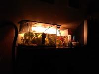 (27.01.2013 doroga) Гуляли с Аленой - Красивые аквариумы Алены