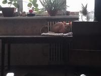 (05.02.2013 zveri) Рэкс - Бдит и наблюдает со своего места