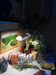 (02.06.2013 blogger) Цветы в глицерине - Перед началом работы