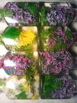 (02.06.2013 blogger) Цветы в глицерине - Готовые баночки