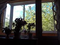 (02.06.2013 gorod) Выходные - Яблони из окна у бабушки