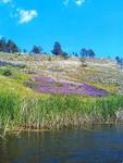 (12.06.2013 doroga) На лодке до 2 висячего моста - Фиолетовые цветы на склоне и ковыль
