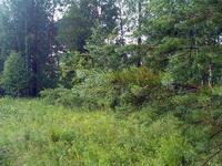 (06.07.2013 doroga) Природный парк Оленьи ручьи - После грозы в лесу