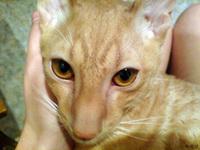(08.12.2007 zveri) Рэкс