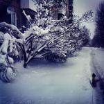 (27.04.2014 instagram, blogger) Выпал снег в апреле - Гуляем с собакой