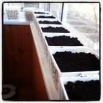(03.05.2014 instagram, blogger) Готовим горшки к посадке - Для овощей