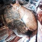 (11.05.2014 instagram, blogger, zveri) Мусян и Тыковка - Кошки в Монастырке