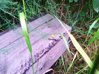 (25.08.2014 blogger) Ящерка - На старой шпале