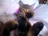 (05.09.2014 zveri) Кошка Муська - Балдеет