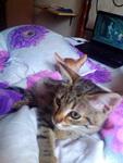 (05.09.2014 zveri) Кото-кот - Это как Котопес, но из котов