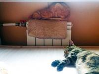 (16.10.2014 zveri) Солнце и батарея - Убийственное сочетание для кошек