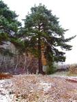 (16.10.2014 gorod, doroga) Первый снег - Дорога к роднику