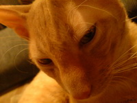 (08.12.2007 zveri) Рекс