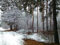 (27.10.2015 gorod) У нас в Каменске выпал снег - Заснеженный лес недалеко от остановки Космос