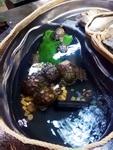 (24.06.2016 doroga) Парк бабочек Екатеринбург - Черепахи в пруду