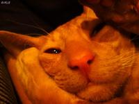 (08.12.2007 zveri) Спит